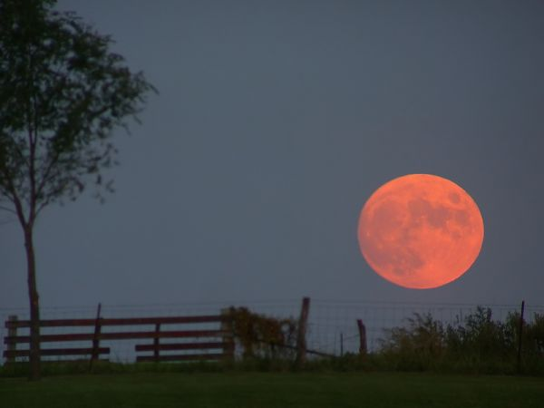 Harvest_Moon_Dan_Bush_Albany_Missouri